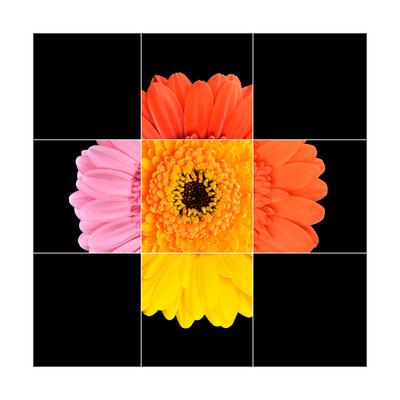Colorful Gerbera Marigold Flower Mosaic Design Prints by  tr3gi