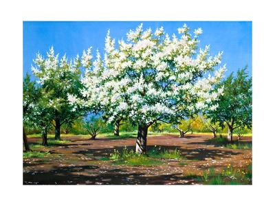 Blossoming, Spring Garden Art by  balaikin2009