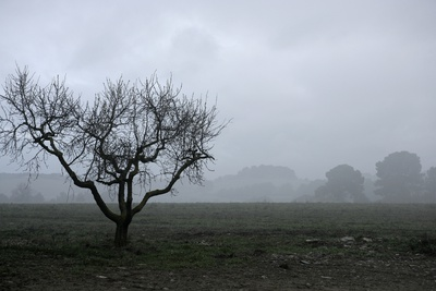 Dried Tree Vanish Into The Winter Fog Photographic Print by  holbox