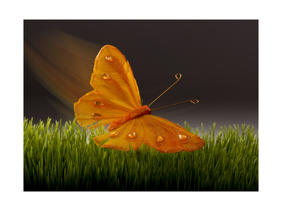 Surreal Butterfly Poster by William Scott