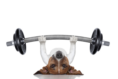 Personal Trainer Dog Photographic Print by Javier Brosch