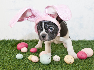 Easter Bunny Puppy Photographic Print by  JStaley401