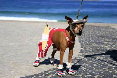 Ipanema Surfer Dog Photographic Print by  OSTILL