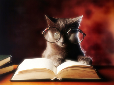 Gray cat with big glasses reading a book because cats are funny cat photo print