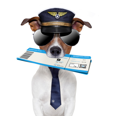 dog with flight boarding pass