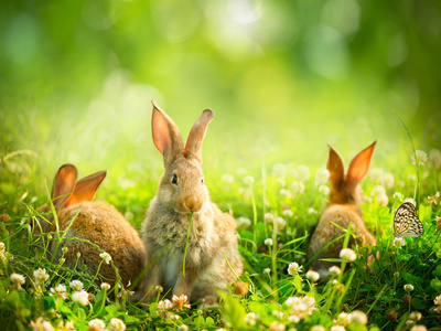 Rabbits animal summer scenes photo by Subbotina Anna