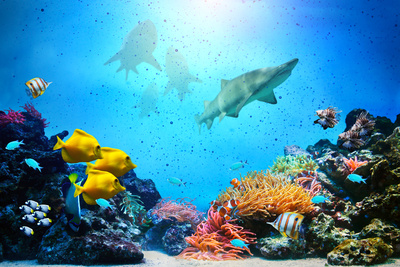 Underwater scene marine art photo poster by Michael Bednarek Photocreo