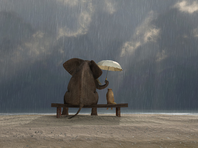 Elephant And Dog Sit Under The Rain Fotografie-Druck von  Mike_Kiev