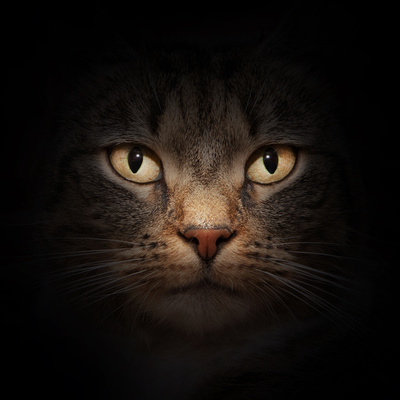 Cat Face With Beautiful Eyes Close Up Portrait Photographic Print by PHOTOCREO Michal Bednarek