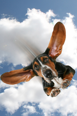 Flying Dog Photographic Print by  graphicphoto
