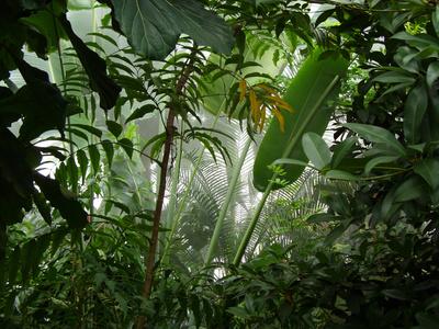 Misty Jungle Fotografisk tryk af  numismarty