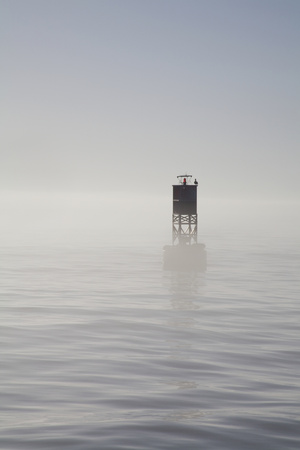Buoy with Sea Lions, Long Beach Harbor, California, USA Photographic Print by Peter Bennett