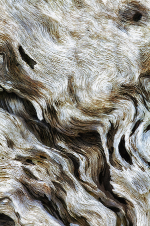 Abstract of Driftwood on the Beach, Jekyll Island, Georgia, USA Photographic Print by Joanne Wells