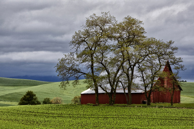 Red Barn under Stormy Skies with Green Peas, Palouse, Washington, USA Photographic Print by  Jaynes Gallery