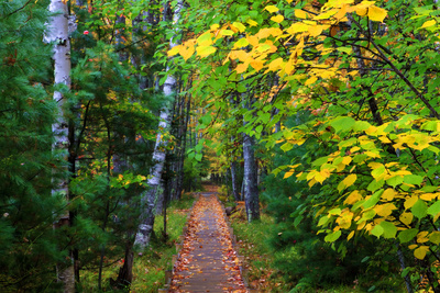 Wooden Walking Trail in Acadia National Park, Maine, USA Photographic Print by Joanne Wells
