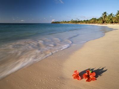 Tropical Paradise, Tabyana Beach, Roatan, Honduras Stampa fotografica di Stuart Westmorland