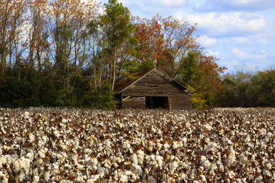 An Old Wooden Barn in a Cotton Field in South Georgia, USA Photographic Print by Joanne Wells