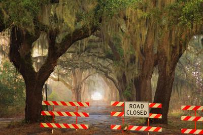 Oak Tree Drive Closed with Barriers, Savannah, Georgia, USA Photographic Print by Joanne Wells
