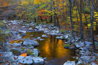 Fall Foliage Along Little River, Smoky Mountains NP, Tennessee, USA Photographic Print by Joanne Wells