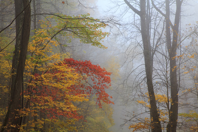 Fog and Fall Foliage, Smoky Mountains National Park, Tennessee, USA Photographic Print by Joanne Wells
