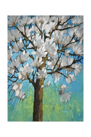 Magnolia in Bloom 1 Prints by J Charles