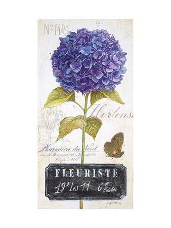 Parisian Hydrangea Prints by Angela Staehling