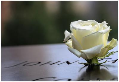 White Rose at September 11 Memorial Posters
