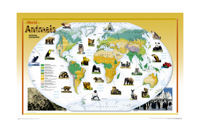 2004 World of Animals Map Posters by  National Geographic Maps