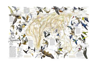 2004 Bird Migration Eastern Hemisphere Map Poster af  National Geographic Maps