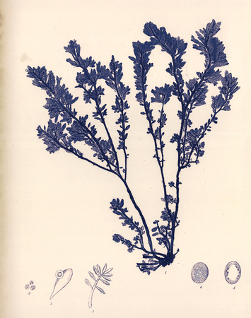 Blue Botanical Study III Posters by Kimberly Poloson