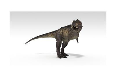 Tyrannosaurus Rex, White Background Prints
