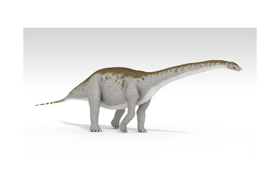Apatosaurus Dinosaur, White Background Prints