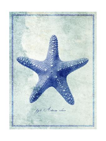 Starfish B Giclee Print by  GI ArtLab