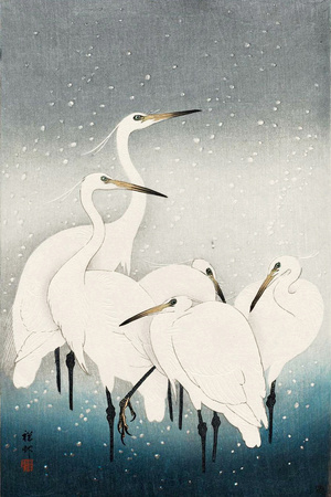 Five White Herons Standing in Water; Snow Falling Giclee Print by Koson Ohara