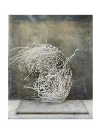 Desert Form I Art by Elena Ray