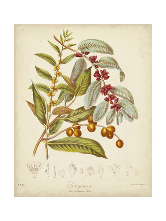 Twining Botanicals VIII Prints by Elizabeth Twining