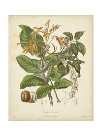 Twining Botanicals VI Prints by Elizabeth Twining