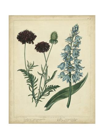 Cottage Florals VI Konst av Sydenham Teast Edwards