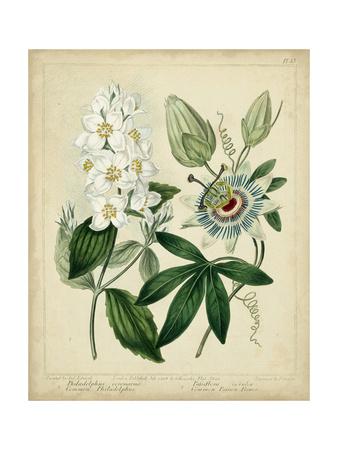 Cottage Florals II Prints by Sydenham Teast Edwards