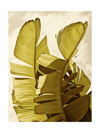Palm Fronds III Posters by Rachel Perry