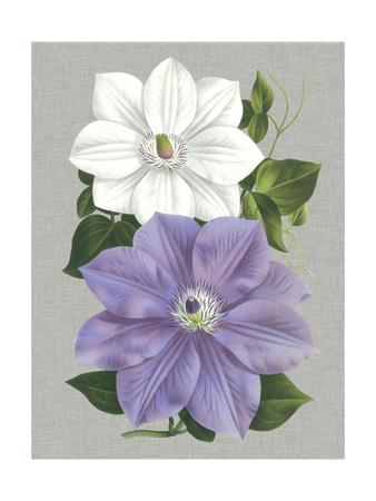 Clematis Blooms I Art by  Pannemaeker