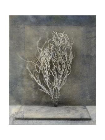 Desert Form III Prints by Elena Ray