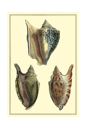 Classic Shells II Prints by Denis Diderot
