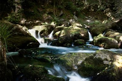 Golitha Falls I Photographic Print by Tim Kahane
