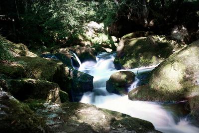 Golitha Falls Ii Photographic Print by Tim Kahane