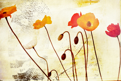 Poppies Dancing Photographic Print by Mia Friedrich