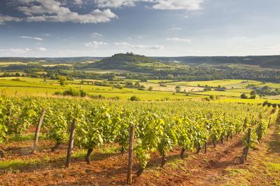 Vineyards Near to the Beaux Village De France of Vezelay in the Yonne Area Photographic Print by Julian Elliott