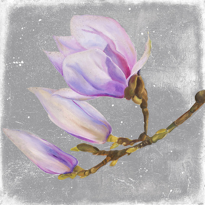 Magnolia on Silver Leaf I Prints by Patricia Quintero-Pinto