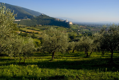 Distant View of the Church of San Francesco, Assisi, Umbria, Italy, Europe Photographic Print by Charles Bowman