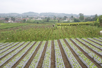 Well-Tended Market Garden, Lembang, Bandung District, Java, Indonesia, Southeast Asia, Asia Photographic Print by Annie Owen